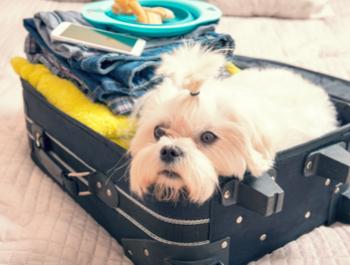 Evcil Hayvanınız ile Seyahat